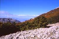 Le Madonie - monti  - Madonie (2470 clic)