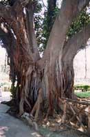 Parco D'Orleans PALERMO Giambattista Scivoletto