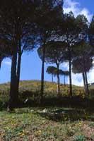 San Martino delle Scale  - San martino delle scale (4365 clic)