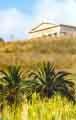Vista del frontone del tempio dorico. In primo piano, due palme nane, piante tipiche della macchia mediterranea  - Segesta (4819 clic)