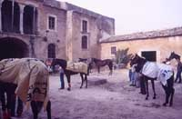 Festa di San Vincenzo ad Acate  - Acate (6061 clic)