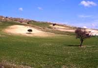 Monti Iblei  - Iblei (3205 clic)