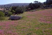 Monti Iblei  - Iblei (3330 clic)