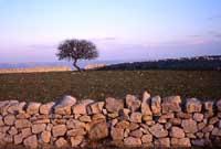 Muri a secco  - Iblei (3459 clic)