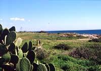 Punta Regilione - Marina di Modica  - Marina di modica (4234 clic)