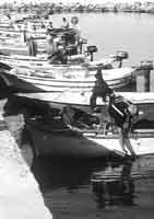 Barche al porto  - Donnalucata (2583 clic)