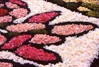 Primavera Barocca: l'infiorata di Noto  - Noto (9982 clic)