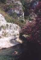 Cava Grande - laghetti di Avola  - Cava grande del cassibile (4148 clic)