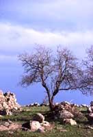 Parco Archeologico di Pantalica  - Pantalica (3245 clic)