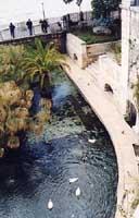 Fontana Aretusa  - Siracusa (3609 clic)