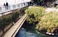 Fonte aretusa (Fontana delle papere)  - Siracusa (6161 clic)