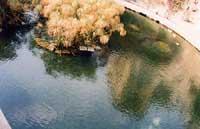 fonte Aretusa  - Siracusa (2224 clic)