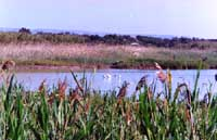Riserva Naturale di Vendicari  - Vendicari (5967 clic)