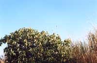 Riserva Naturale di Vendicari  - Vendicari (2703 clic)