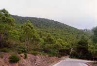 vista di Montagna Grande lungo la strada che conduce in vetta  - Pantelleria (3607 clic)