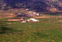 la valle del passito - VALLE DI MONASTERO  - Pantelleria (6012 clic)