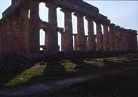 Tempio di Selinunte  - Selinunte (1747 clic)