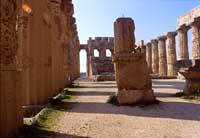 Tempio di Selinunte  - Selinunte (1740 clic)