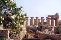 Tempio di Selinunte  - Selinunte (2092 clic)