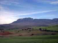 Vista del monumentale bastione di rocca busambra con, alle falde, il bosco della Ficuzza.  - Ficuzza (3223 clic)
