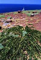 Isola di Ustica  - Ustica (5194 clic)