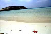 Isola dei Conigli selvatici  - Lampedusa (32538 clic)