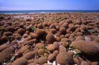 Palle di spiaggia  - Petrosino (9230 clic)